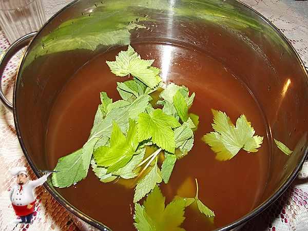 добавляю в квас листья мяты и смородины