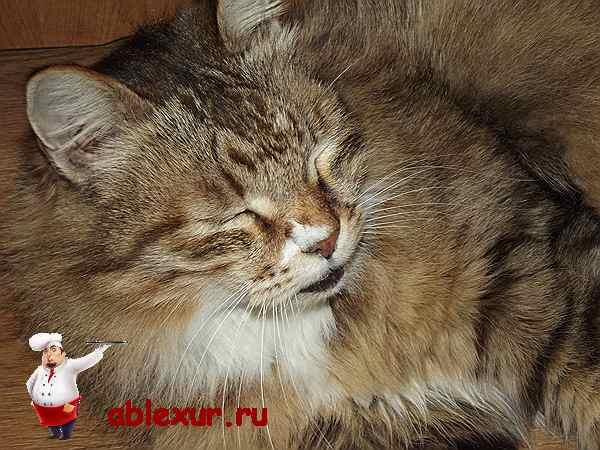 Домашний кот Василий