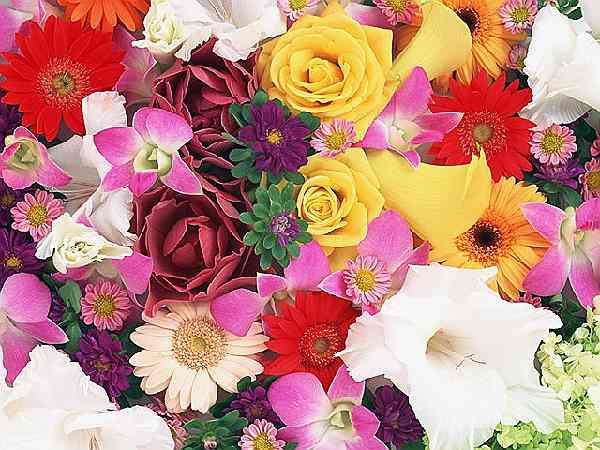 Что означают цвета цветов когда дарят
