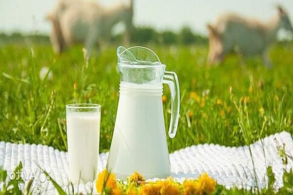 польза козьего молока_1