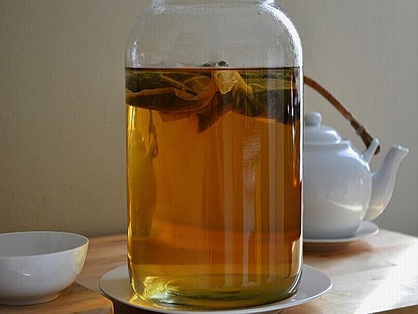 чем полезен чайный гриб для человека