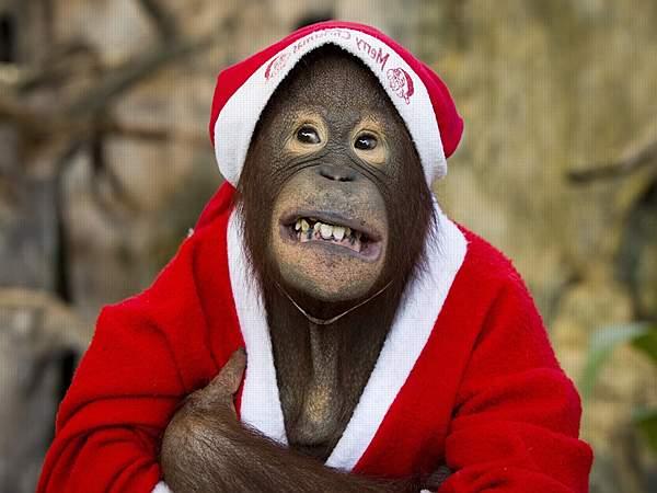 что подарить на новый год 2016 обезьяны
