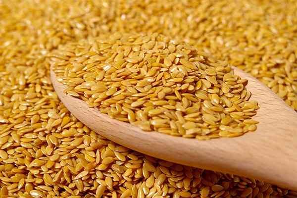 польза и вред семени льна