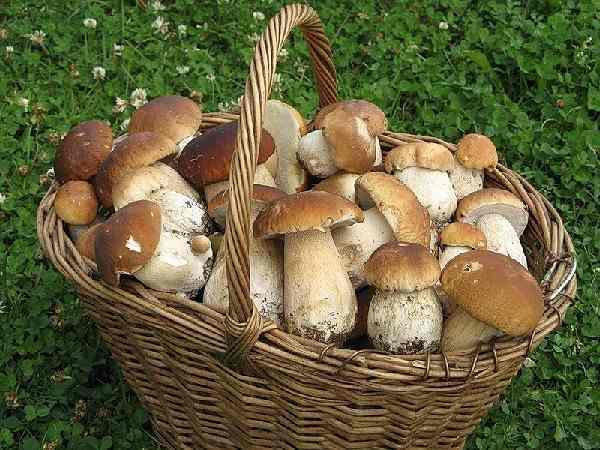 как сохранить грибы