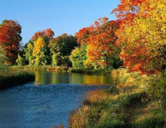 осенний лес и пруд