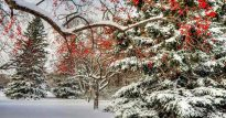 Зимний лес 🌲— стихотворение и зимнее ❄ настроение